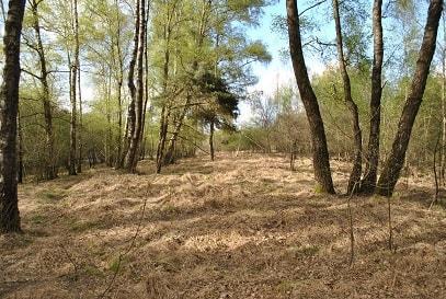 Lebensraum der Waldschnepfe