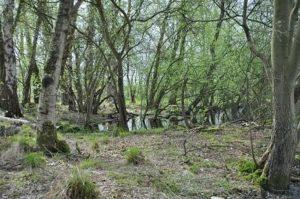 Waldschnepfen Lebensraum