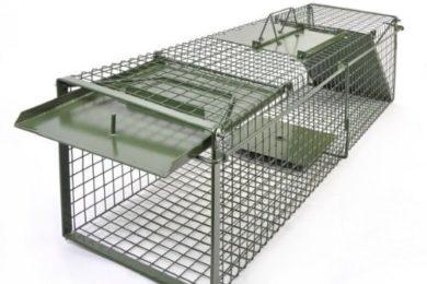 KrapTrap® Waschbärfalle Fuchsfalle Dachsfalle Marderfalle XXL 130 x 35 x 35 cm